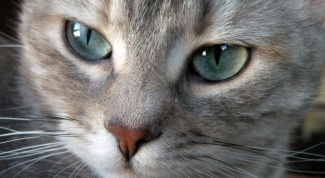 Как выбрать кличку коту