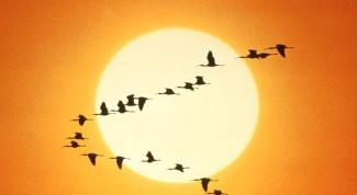 Where flying wild geese, ducks, cranes