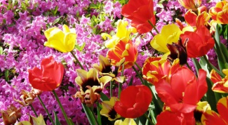 How to grow flowers in the garden