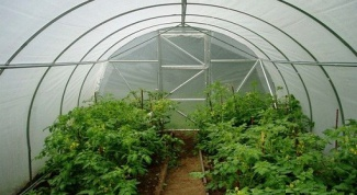 What is grown in greenhouses.