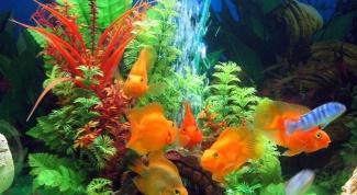 Как вклеить фон в аквариум
