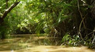 Как вести себя в джунглях