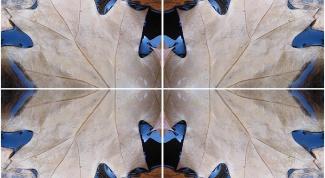 Как в Фотошопе сделать зеркальное изображение
