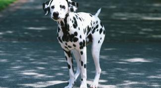 Как взять собаку в дар