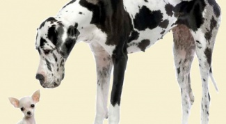 Как лучше назвать большую собаку