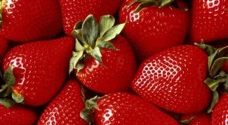 Как лучше выращивать клубнику