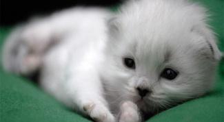 Как назвать белого котенка - мальчика