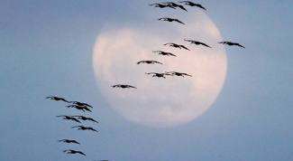 Where birds fly away in autumn