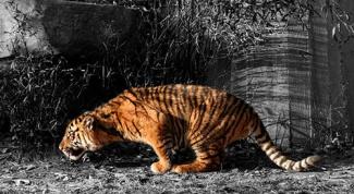 Как в Фотошопе сделать на черно-белом фото цветной элемент