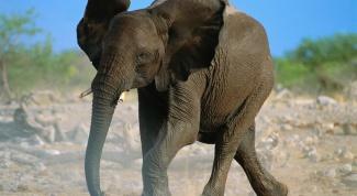 Как сделать маску слона