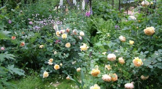 Как оформить розарий