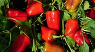 Как варить перцы