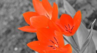 Как выделить цветом на черно-белом фото