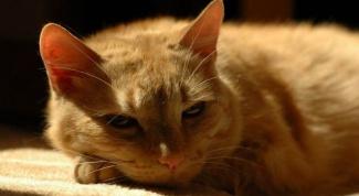 определить срок беременности у кошки