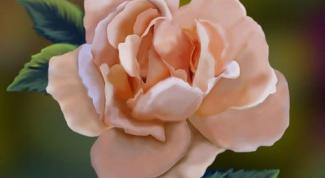 Как нарисовать красиво розу