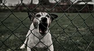 Как отогнать собаку