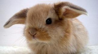 Как гладить кролика