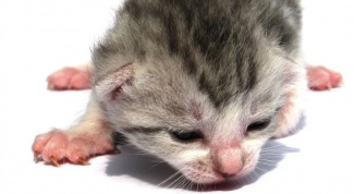 How to fatten up a weak kitten