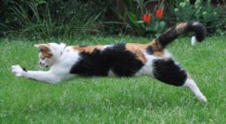 Как обучить кошку трюкам