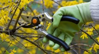 How to trim shrubs