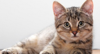 How you get rid of fleas off pregnant cat