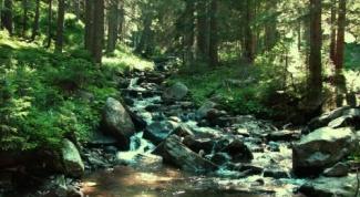 Как найти человека  в лесу