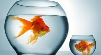 Как можно использовать аквариум
