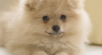 Как не заразиться глистами от собак