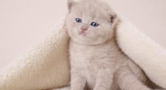 Как перевести котенка на корм