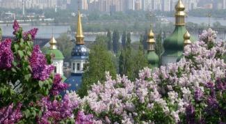 Как переехать  в Киев