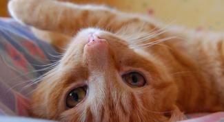 Как выбрать место для кошки