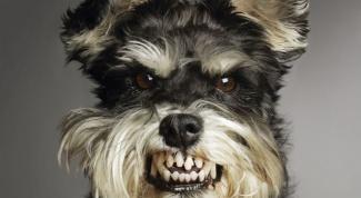 Как нарисовать злую собаку