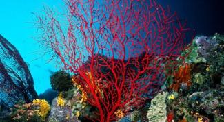 Как нарисовать кораллы