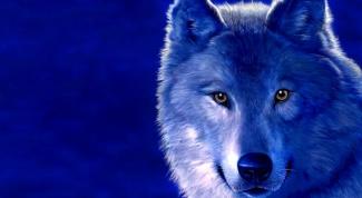 Как нарисовать волка карандашом поэтапно
