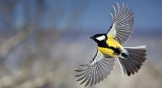Как нарисовать птицу  в полёте
