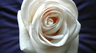 Как нарисовать цветок поэтапно