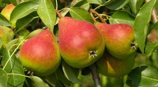 Как варить компот из груш