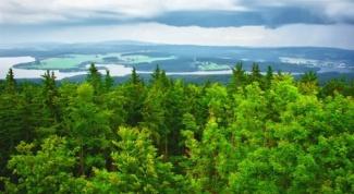 Как принять участие в высадке леса