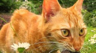 Как перевести кошку на натуральный корм