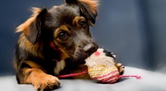 Как защитить собаку от паразитов