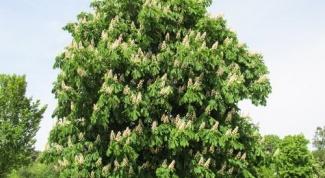 Как рисовать деревья и их листья
