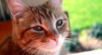 Что делать с котом