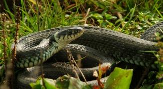 Как защитить себя от змей