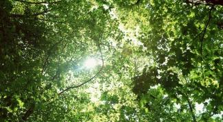Когда и где проводится Национальный день посадки леса