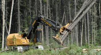 Как выписать лес на строительство