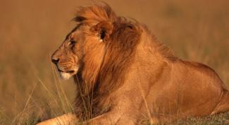 Какие животные водятся в Африке