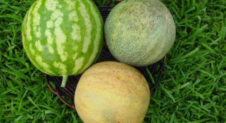 What to plant next to the melons
