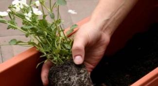Почему растения нужно пересаживать весной