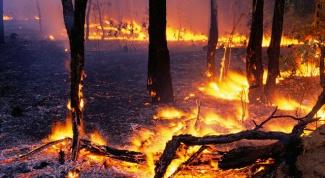 Как предотвратить лесные пожары