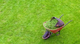 Как подготовить газон к лету